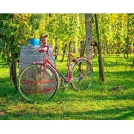 SAUMUR PRIVATE Half day Loire wine tour